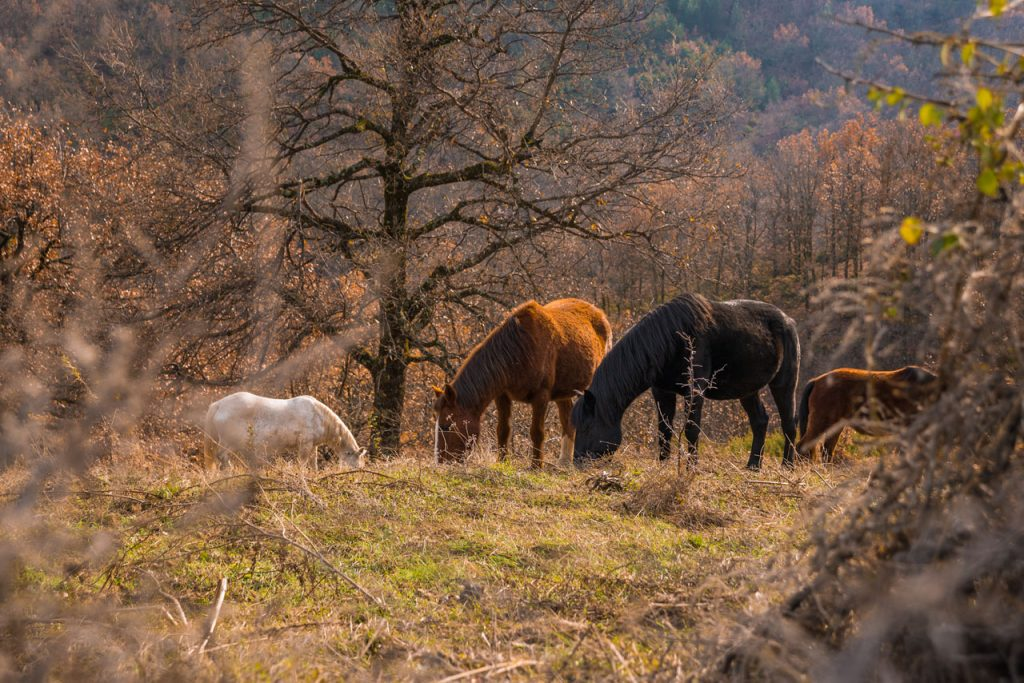 horses-wildlife-tourism